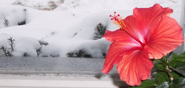 http://refried.org/media/images/snow-flower.jpg
